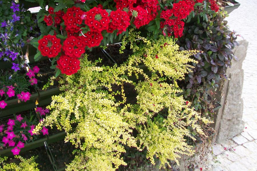 puzle-fiore-michele_07-06
