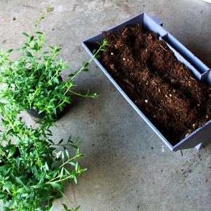 puzzle-piante-erigeron-karviskianum_02-05-01