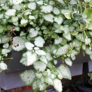 puzzle-piante_02-05-02