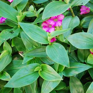 puzzle-piante_02-05-03